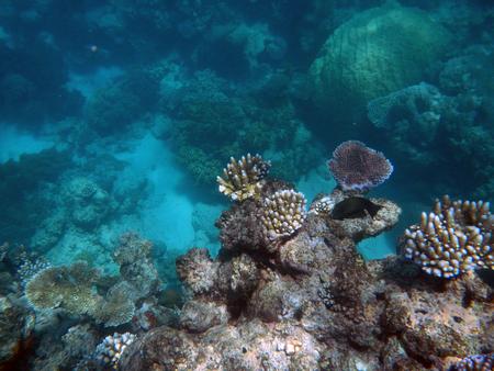 Snorkeling sur la Grande Barrière de Corail, Australie