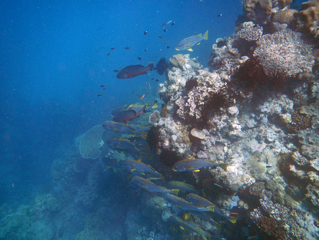 Snorkeling on the Great Barrier Reef, Australia Banco de Imagens