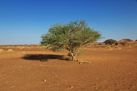 The ancient pyramids of Meroe in Sudan's desert Stockfoto