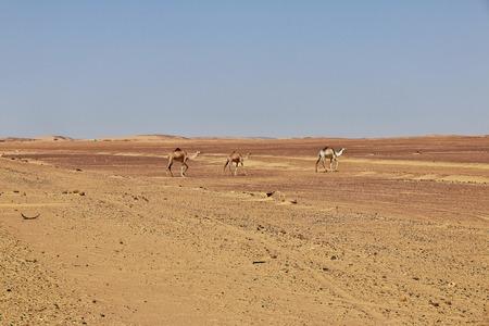 Dry Sahara Desert, Africa
