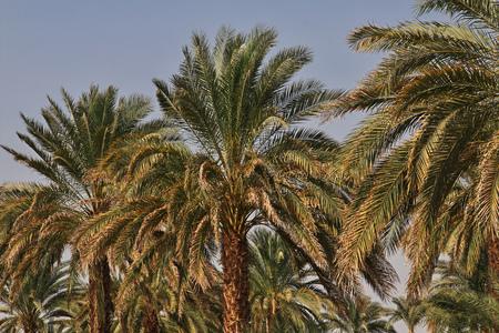 An oasis in the Sahara desert, Africa