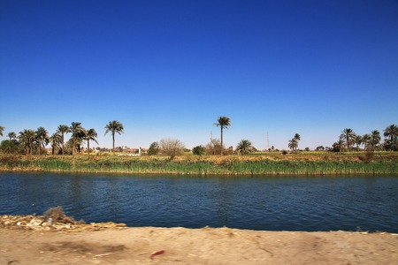 Papyrus field in El Minya, Egypt