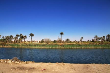 Papyrusfeld in El Minya, Ägypten