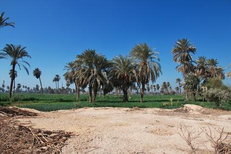 Oasis in desert in Amarna, Egypt