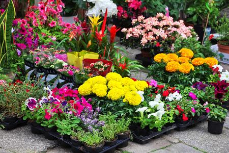 The flower market in Santiago de compostela, Spain