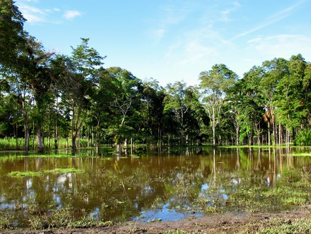The Amazon river in Peru and Brazil Stock Photo