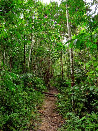 Jungle on Amazon river in Peru