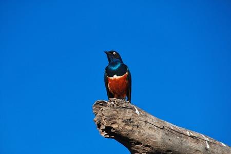 A bird on Safari in Kenia and Tanzania, Africa