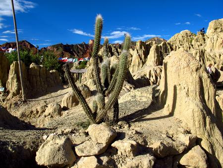The cactus in park of La Paz, Bolivia