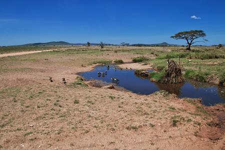 Bird on safari in Kenia and Tanzania, Africa