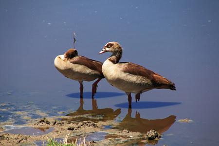 Bird on safari in Kenia and Tanzania, Africa Stockfoto