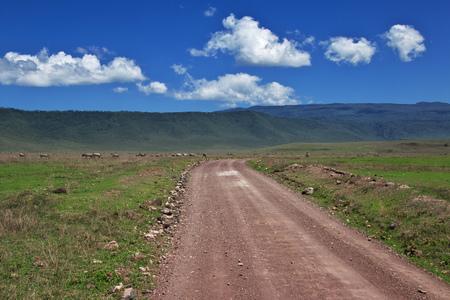 Safari in Kenia and Tanzania, Africa Stockfoto