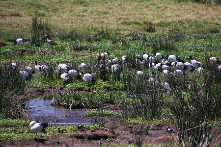 Birds on safari in Kenia and Tanzania, Africa