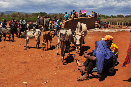 Cows on the local market in Africa, Moshi