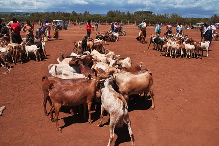 Goats on the local market in Africa, Moshi Stock Photo - 124324262