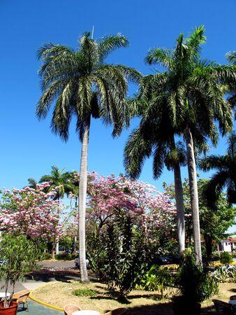 The park in Cienfuegos, Cuba Stock Photo - 129391022