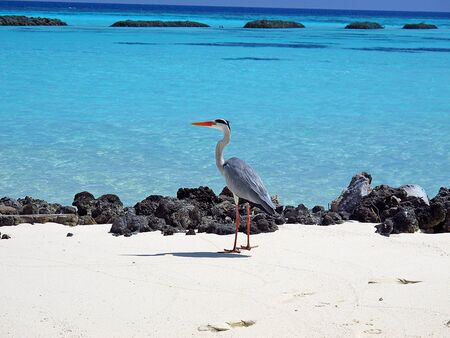 The bird on Maldives, Indian ocean