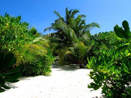 The beach on Maldives, Indian ocean