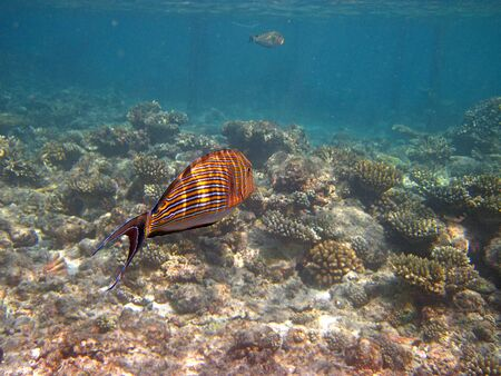 Snorkeling in the Maldives islands Stockfoto