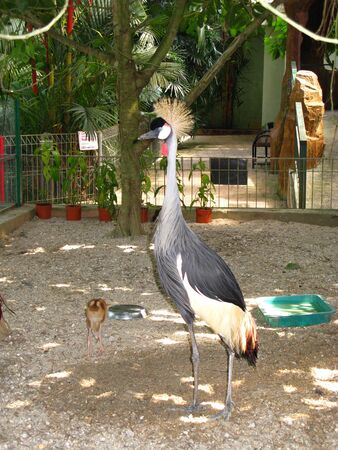 Langkavi  Malaysia - 18 Jan 2010: The bird in Zoo, Langkavi island, Malaysia