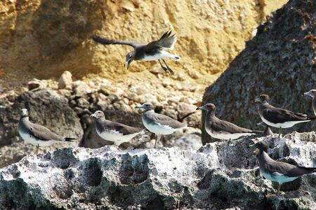 The bird in Shuab bay on Socotra island, Indian ocean, Yemen