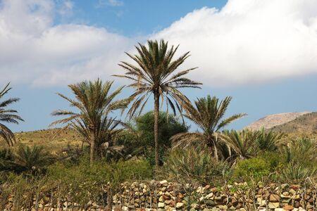 The landscape on Homhil plateau, Socotra island, Indian ocean, Yemen Stock Photo