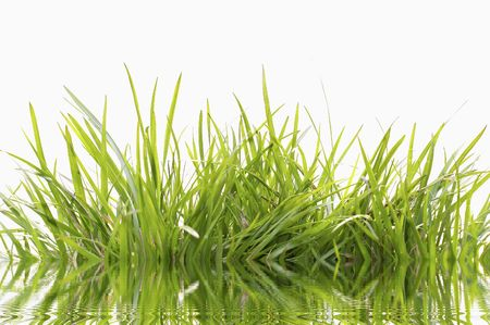 grass green Stock Photo