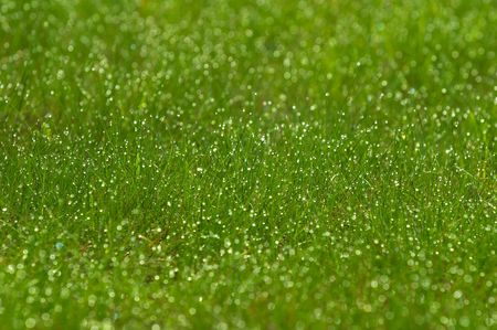 green grass Stock Photo - 889775