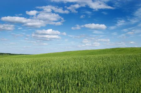 Landscape a field of a cloud photo