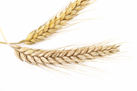 Grain ears Stock Photo - 1416020