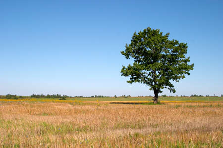 Tree in a field photo