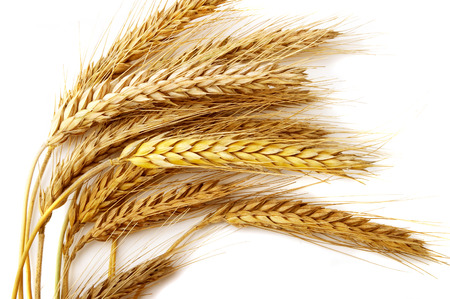 Grain ears Stock Photo - 1526623