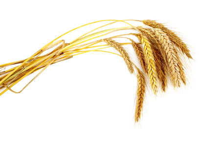 Grain ears Stock Photo - 1536106