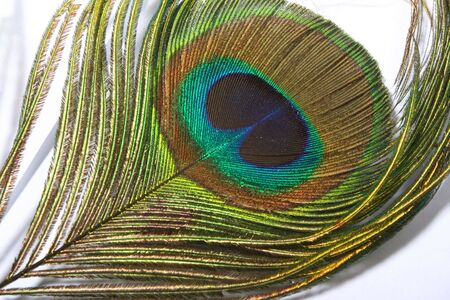 peacock eye: Feather of the peacock, the peacock eye