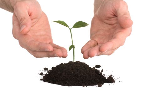 men, plant, business concept Stock Photo - 2330641