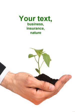 business men,  plant Stock Photo - 3002861