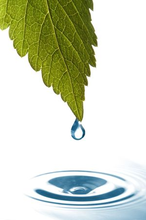 drip: Water dripping of a leaf