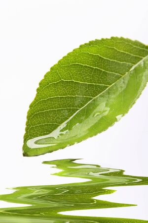 Water dripping of a leaf photo