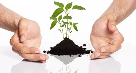 environmental safety:  men holding a plant between hands  Stock Photo