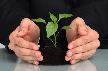 expand: business men  a plant between hands  Stock Photo
