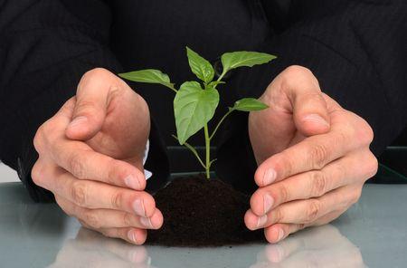 little business man: hombres de negocios de una planta entre manos