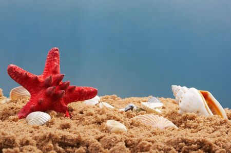 lovely seashells against  Stock Photo - 3350944