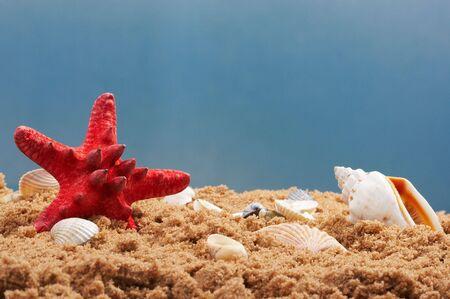 lovely seashells against Stock Photo - 3350944