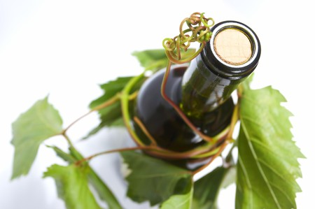 wine bottle and young grape vine  photo