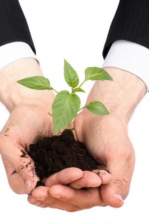 business men,  plant Stock Photo - 4576580