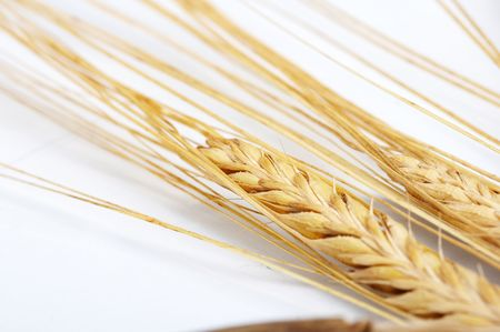 Grain ears Stock Photo - 5250570