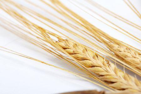 Grain ears Stock Photo - 5250570