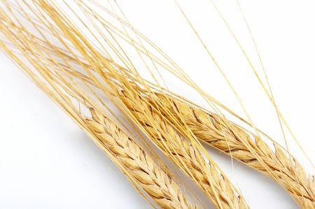 Grain ears Stock Photo - 5250575