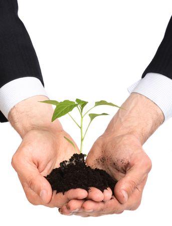 nurturing: business men,  plant