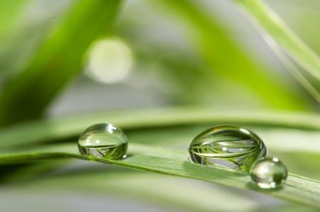 gocce di acqua: gocce con erba verde  Archivio Fotografico